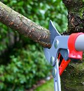 tree trimmers houston